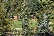 Picea omorika 'Pendula' C45 200-250
