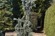 Picea pungens 'Moerheim' C60 200-250