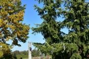Picea omorika 'Bielsko Biała' C160 400-450