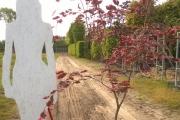 Fagus sylvatica 'Purpurea Tricolor' C20 150-200